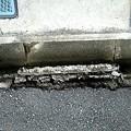 写真: 側溝崩落…市の持ちもんやし…(・・)ぴ4