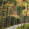 写真: 圓光寺の竹林22015