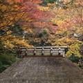 写真: 晩秋のかやぶき屋根2015