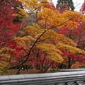 黄葉の京都寺院2015