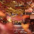光明寺の山門風景2015