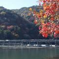 晩秋の渡月橋2015