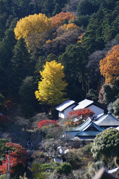 写真: 秋の風景北鎌倉!(091128)