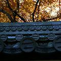 写真: 山門の紅葉、報国寺!(0912129)