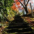 Photos: 石段を登る紅葉!(091212)