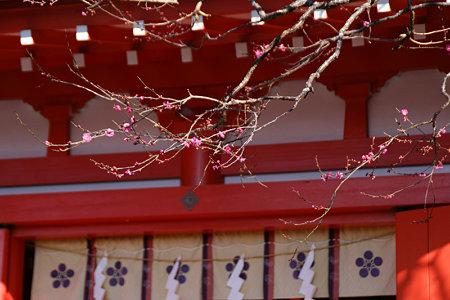 紅梅咲く、鎌倉/荏柄天神社!(100110)