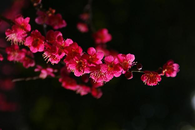 Photos: 鮮やかな紅千鳥!(100220)