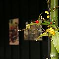Photos: 季節の花筒のおもてなし!(110115)