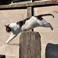 Photos: 飛び猫