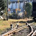 Photos: 列車猫