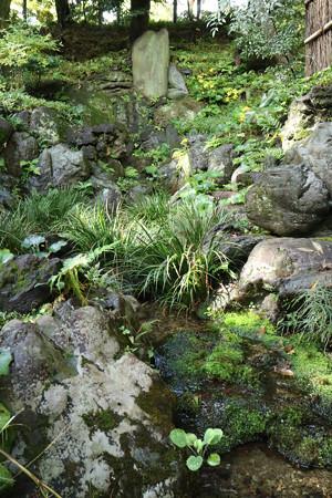 殿ヶ谷戸庭園 (11)