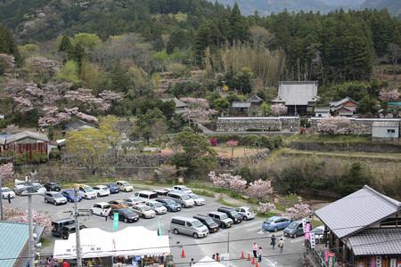 横輪桜 (9)