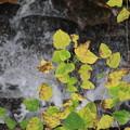 深山公園 紅葉