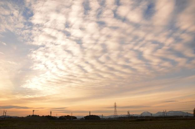夕暮れ前ひと時の鱗雲