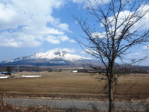 特急スーパー北斗11号の車窓♪ 駒ケ岳と枯れ木