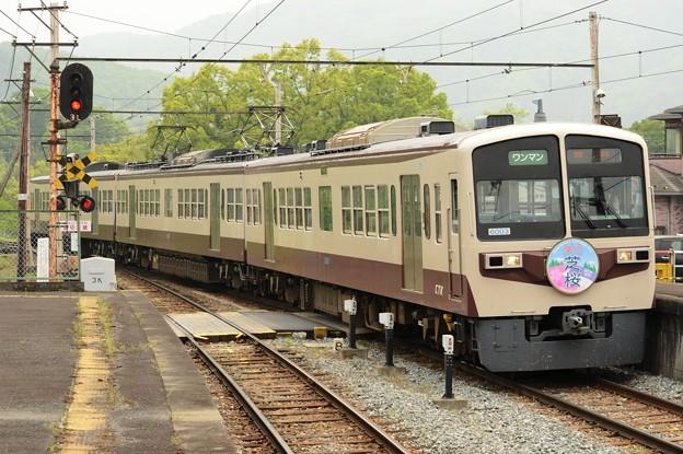 秩父鉄道6000系急行芝桜号
