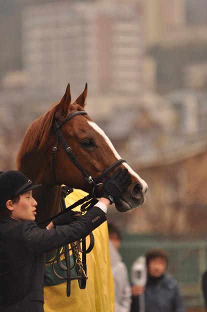 Gold Blitz 06