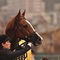 Photos: Gold Blitz 06