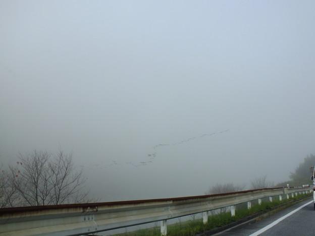 「トリ霧中」の説明