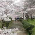 二人の桜道