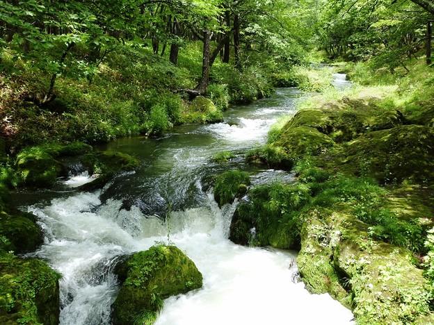 11-140719_湯川の流れ(石楠花橋上) (2)