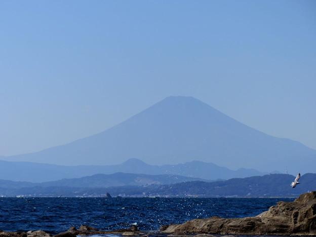Photos: rs-151008_23_岩屋からの眺め(江の島) (6)