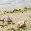 写真: 沖縄の砂浜