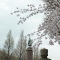 大村益次郎銅像と桜