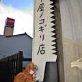 Photos: 鋸ぎこぎこ♪