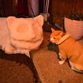 写真: 猫ちゃんの雪像