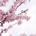 Spring-9700
