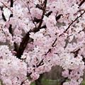 Photos: Spring-9704