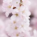 Photos: Spring-9706