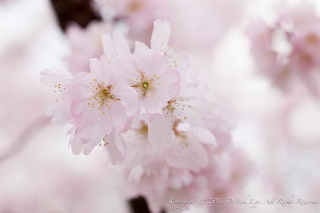 Photos: Spring-9711