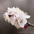 Spring-9724