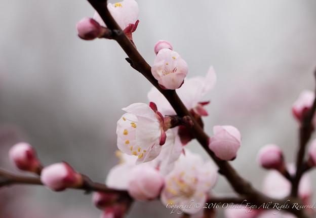 Photos: Spring-9726