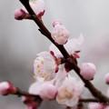 Spring-9726