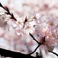Photos: Spring-9758