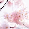 Spring-9767
