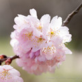 Photos: Spring-9771