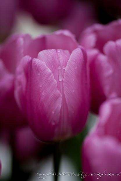 Photos: Spring-9556
