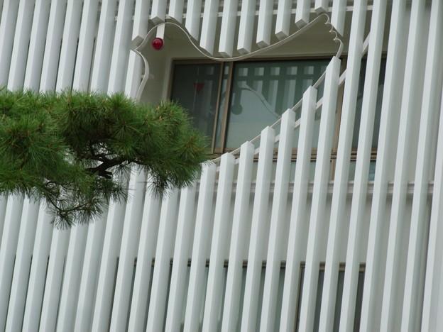 【鎌倉】鳩サブレー|豊島屋[2014]