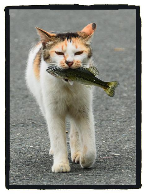西浜の猫1