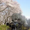 桜とSL人吉