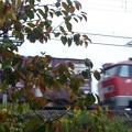 紅葉の向こうをレッドサンダーが通る