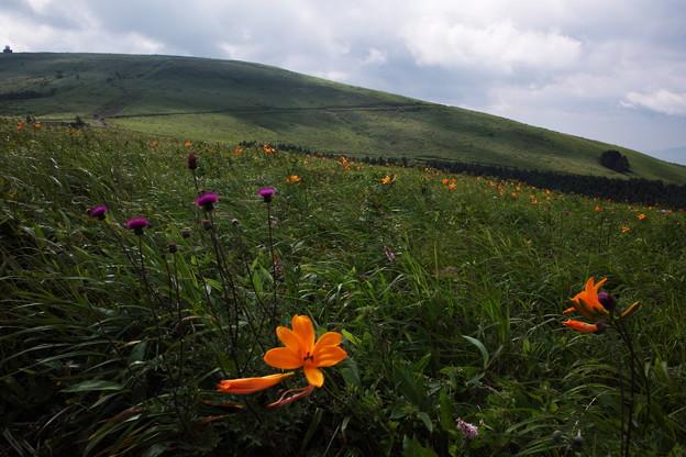 Photos: 高原の花園