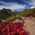 草紅葉と南八ヶ岳オールスターズ