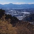 蝋梅の宝登山より秩父盆地を見下ろす
