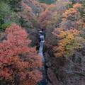 写真: 水と紅葉。