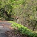 140513-129東北ツーリング・湯の又大滝・到着